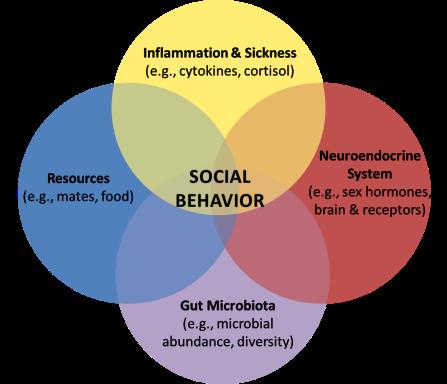 Research Page Venn Diagram (from Kristyn)