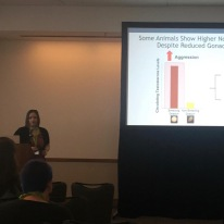 Kat competes for the Division of Comparative Endocrinology's Aubrey Gorbman Award for Best Student Oral Presentation at the Society for Integrative and Comparative Biology's 2020 meeting in Austin, Texas.
